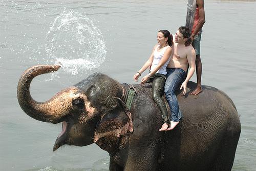 Nepal wildlife Tours, Chitwan National Park, Bardia, Kosih Tapu, wildlife resorts, birdwatching, Elephant back Safari, Rhinoceros watching