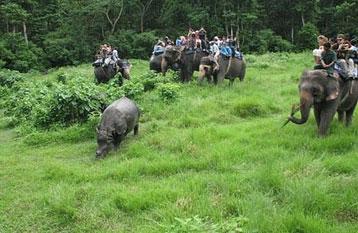 Jungle Safari in Nepal, Nepal Jungle Safari, National Park in Nepal, experience jungle safari in Nepal, Adventure Jungle Safari, Jungle Safari Information